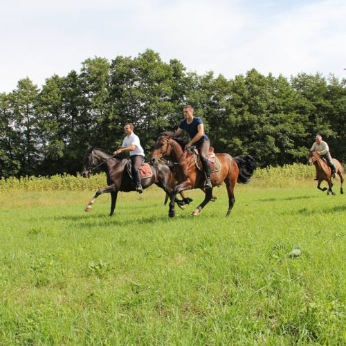 Horses cantering. Fast paced, centre-based riding holiday in Croatia.