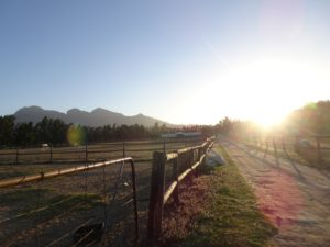 Riding Cape Winelands, Fine dining and glorious riding at the Cape Winelands, In The Saddle