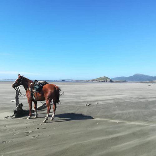 beach riding Argentina