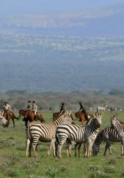 Tanzania, horseriding, zebras