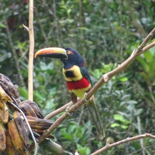 Wilderness ride in Costa Rica. Riding Holidays with In The Saddle. Toucan.