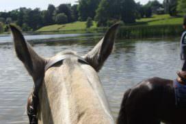 Ireland, castle leslie. lake riding