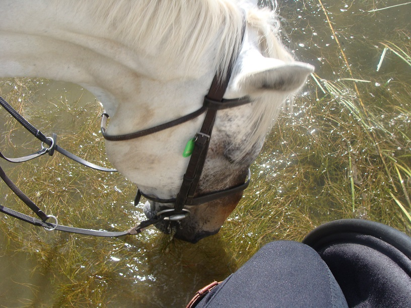 Ireland, castle leslie, horses