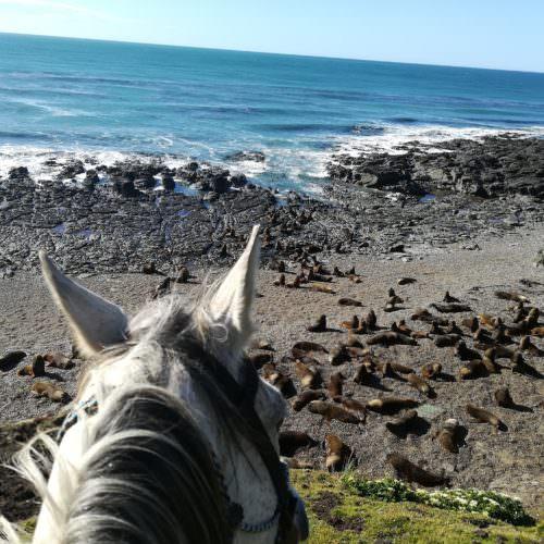 Riding in Argentina