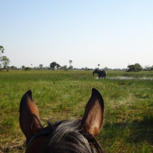 Elephant off horseback