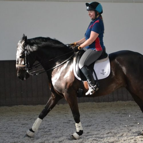 Dressage Holidays, The adventures of a Show Jumper in Dressage paradise – Part 1, In The Saddle