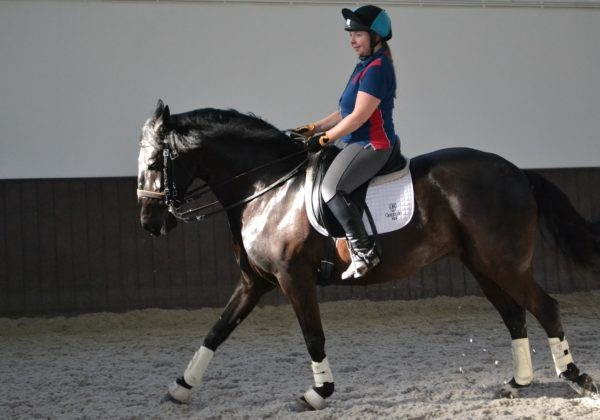 , The adventures of a Show Jumper in Dressage paradise – Part 1, In The Saddle