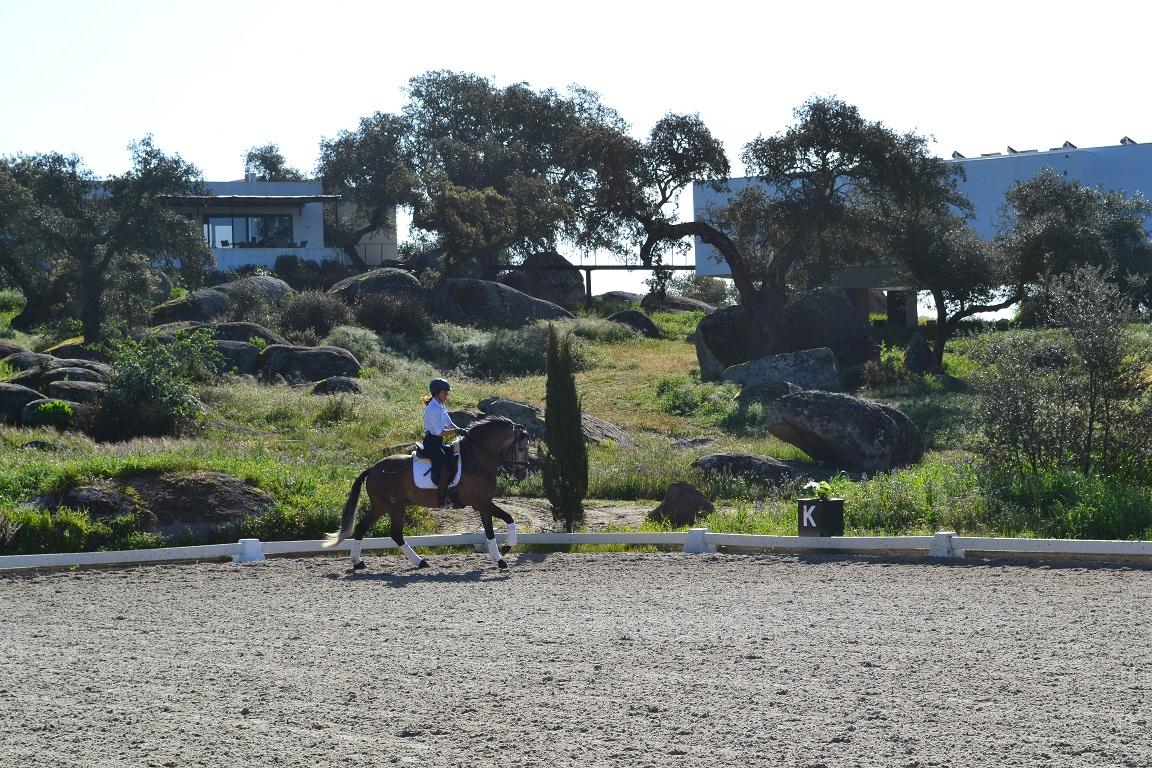 Monte velho, portugal, horses, dressage