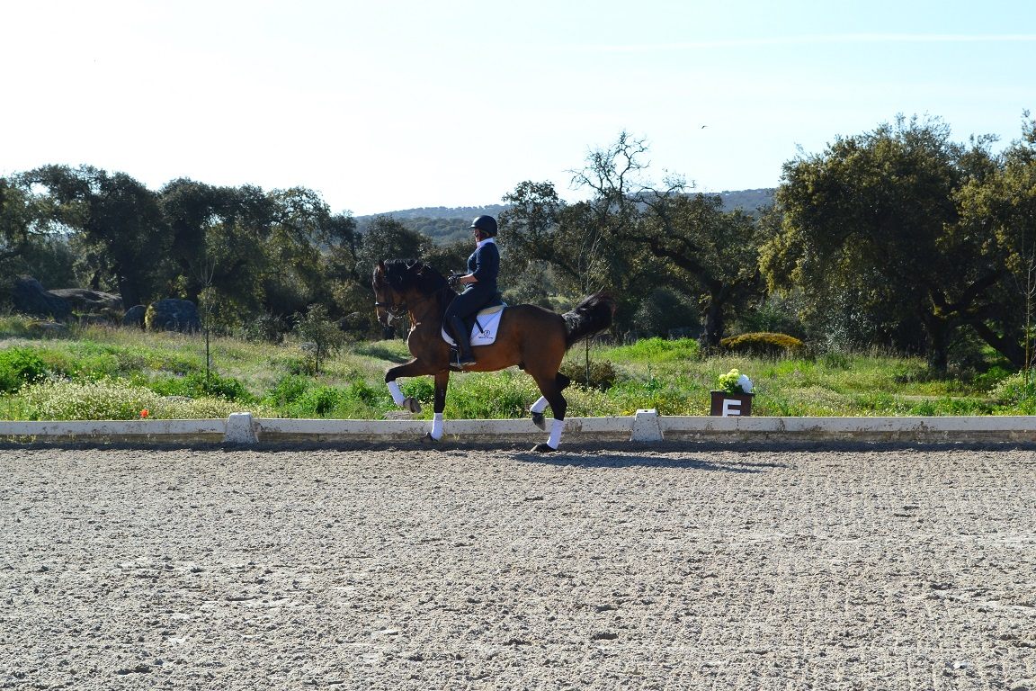 Portugal, monte velho, horse riding, dressage