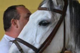 Portugal, Alcainca, horses
