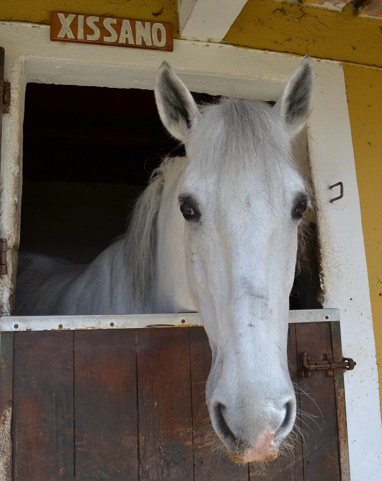 Portugal, horse, Alcainca