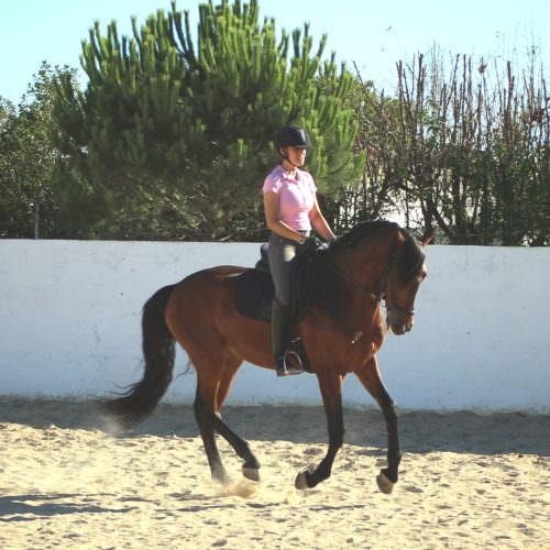horses, portugal, riding, alcainca, bullring