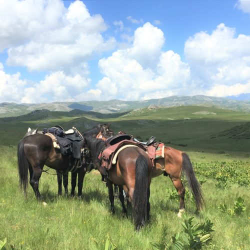 horses in macedonia - riding holidays