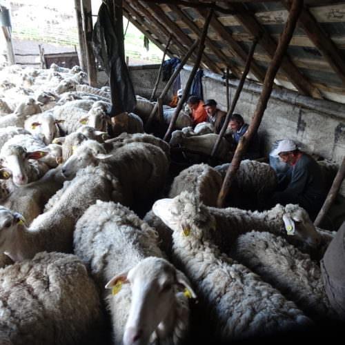 Sheep farm in Macedonia