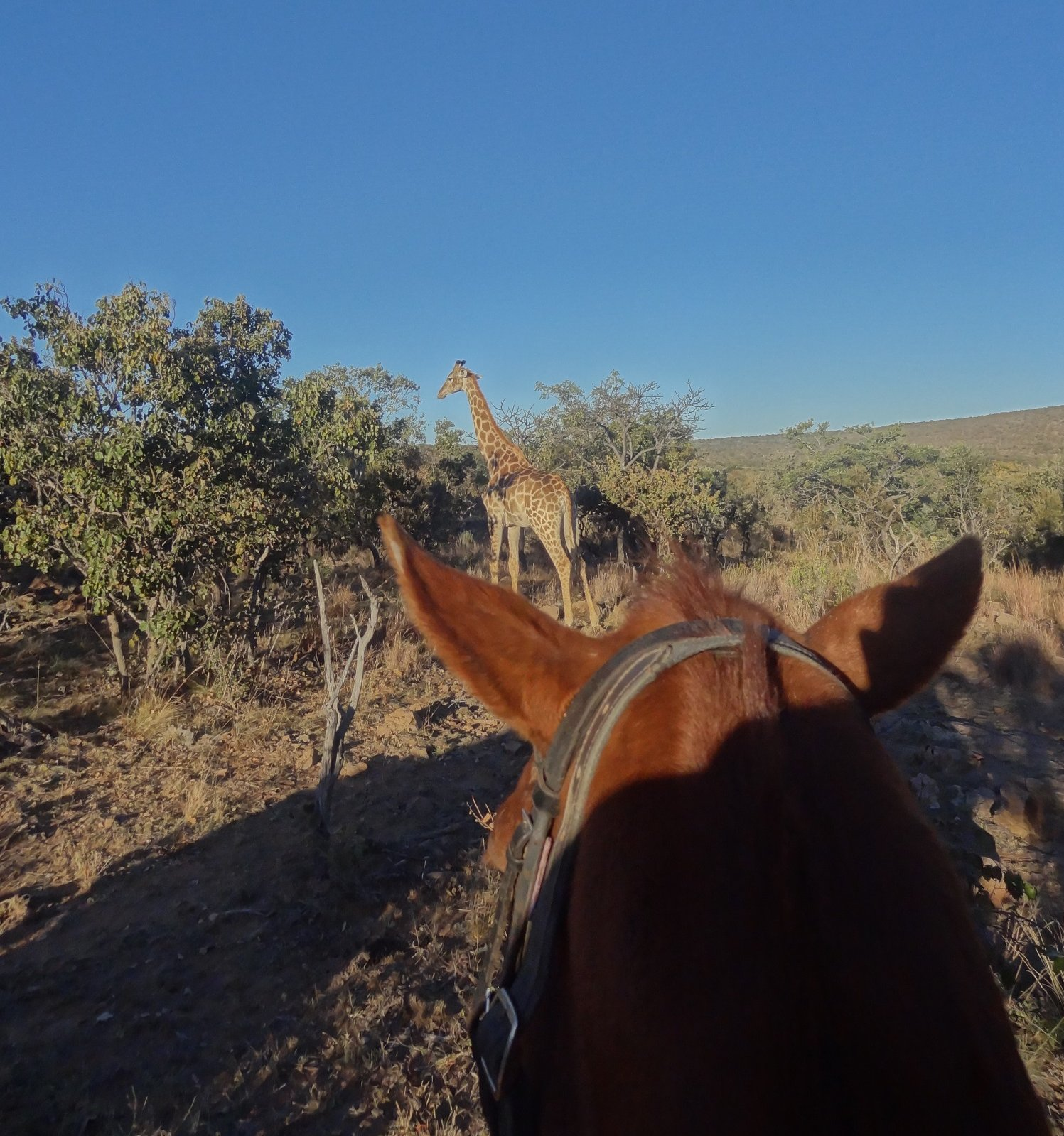 , A Rare Opportunity To Assist With Safari Conservation, In The Saddle