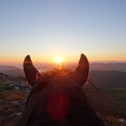 Early morning sunrise ride - horses in Macedonia