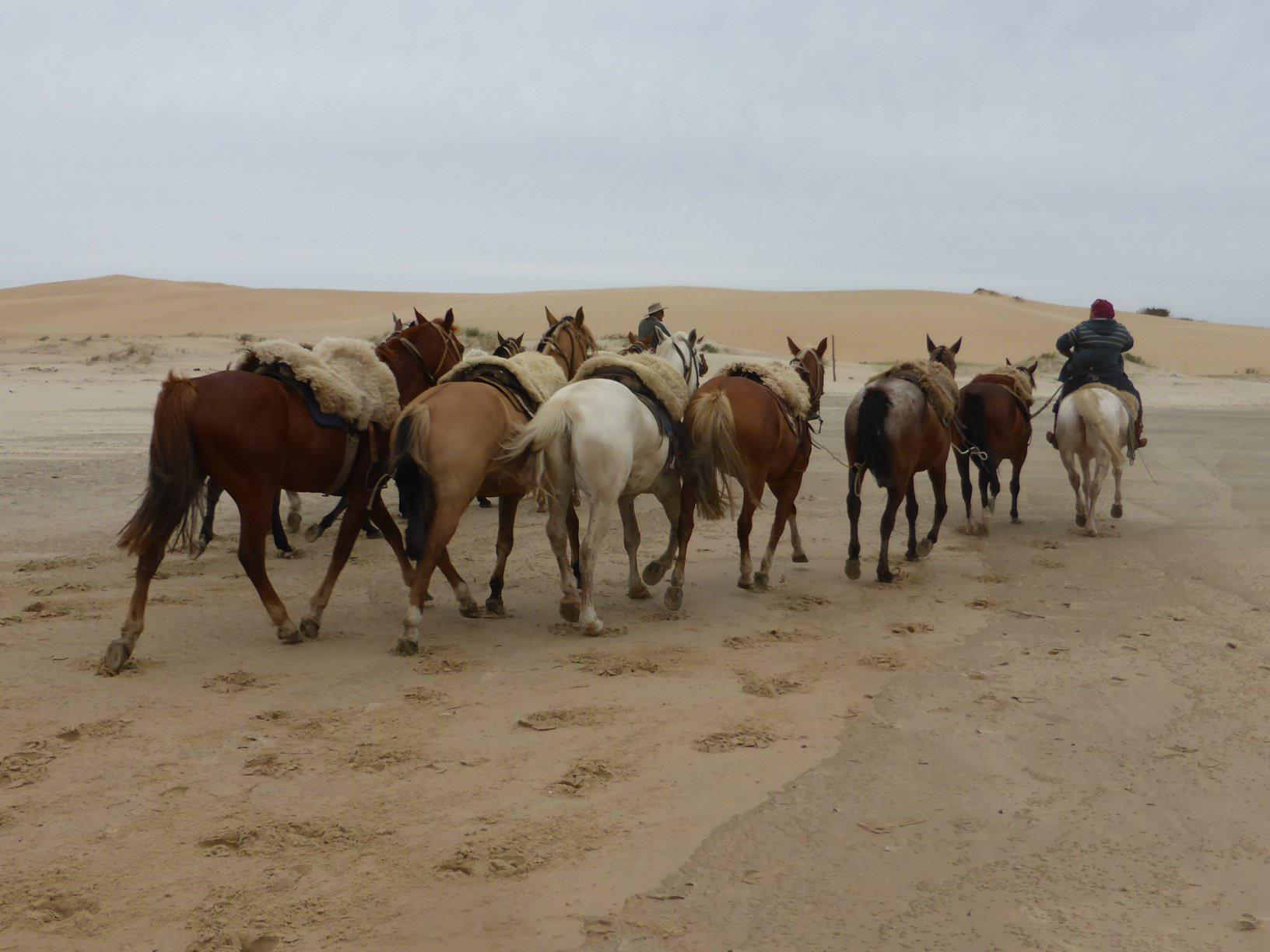 Horse string in Uruguay