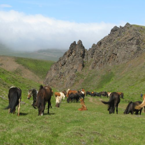 Highlands Ranch Backcountry Wilderness Area: Discover The Highlands Of Iceland
