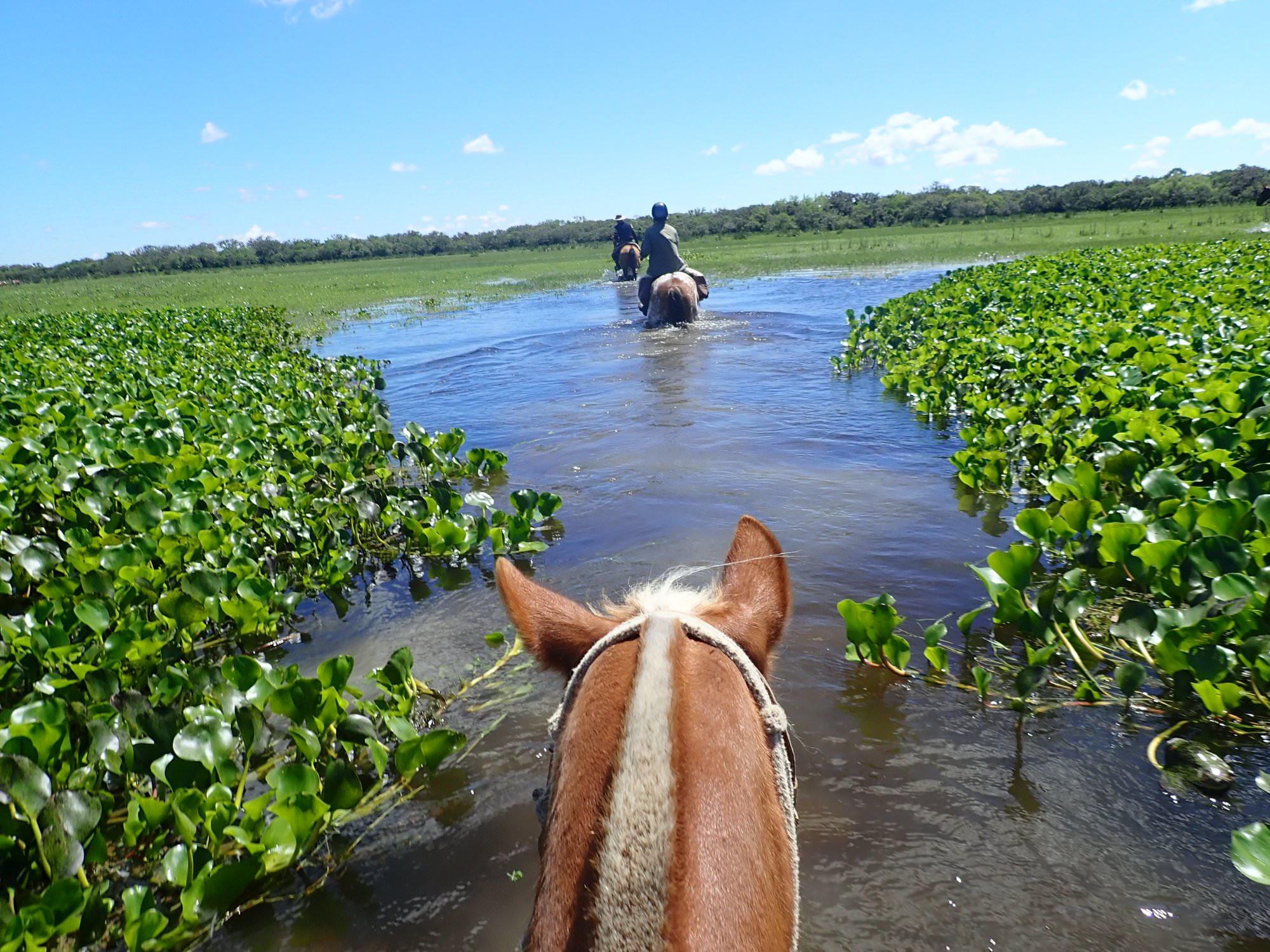 Riding in wetlands in Uruguay