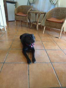 Poppy the dog.