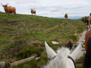 , Wolf prints, plenty of wild horses and the perfect combination of wilderness, relaxation and riding in Portugal, In The Saddle