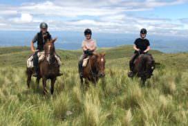 los potreros horses