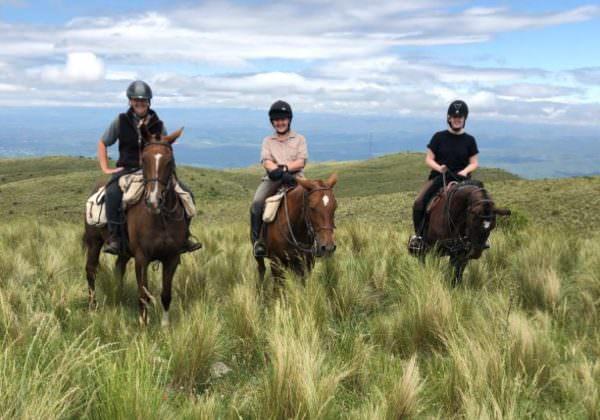 los potreros paarden